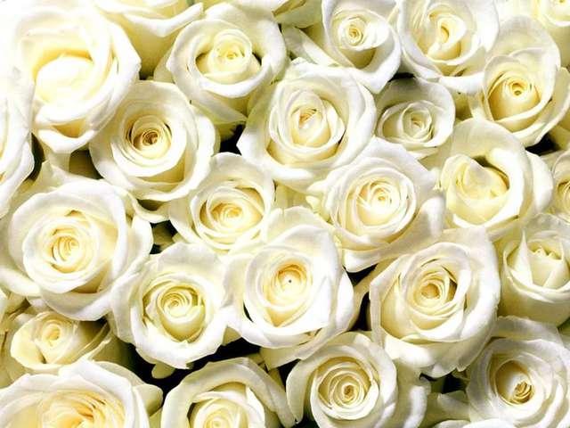 Февраля открытки, красивые цветы картинки розы белые