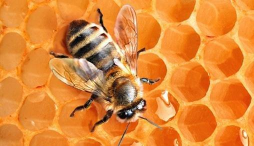 лечение пчелами цена